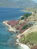 Oleanders op Skyros. - Foto van Dick & Joke