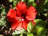 mooie bloem Cyprus
